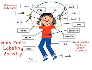 Body Parts Labeling Activity and Adapted Book Page