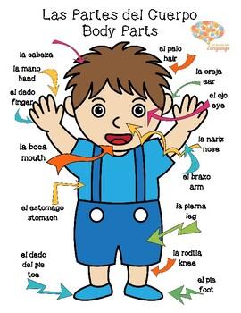 Body Parts Spanish/English Poster, 2 Yr. Ann. FREEBIE! Speech-Language, Vocab