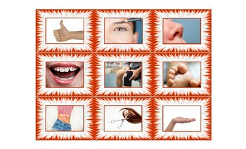 Body Parts Spanish Legal Size Photo Card Game