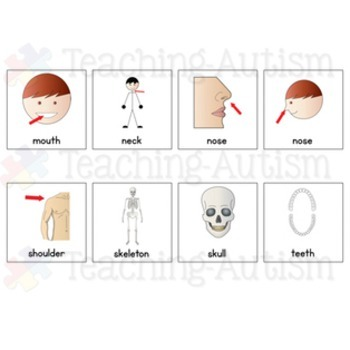 Body Parts Symbol Communication Cards - Autism