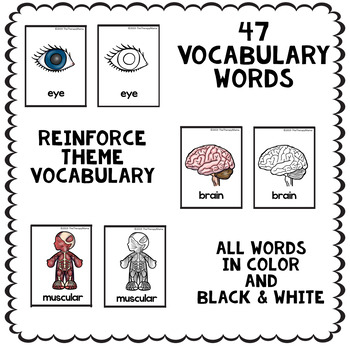Body Parts Vocabulary Picture Cards