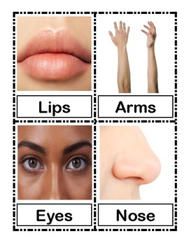 Body Parts Visual Cards