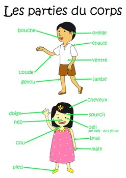 Body Parts in French - Les parties du corps