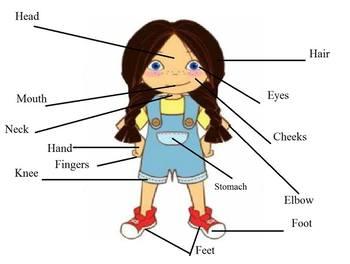Body Parts of Meg VIPKID