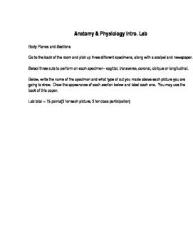 Body Regions/Planes Lab