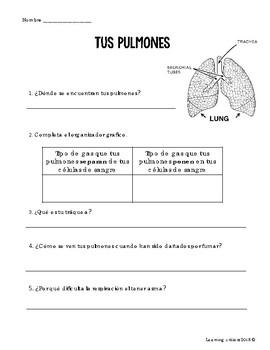 Body (SPANISH)