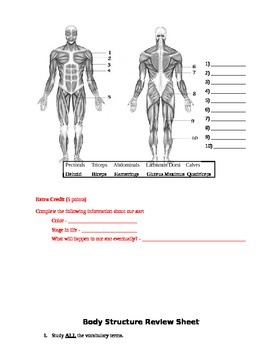 Body Structure Assessment (Test)