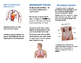 Body System Brochure Project
