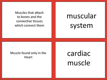 Body System Card Sort