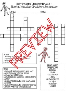 Body System Crossword Puzzles (circulatory, respiratory, muscular, and skeletal)