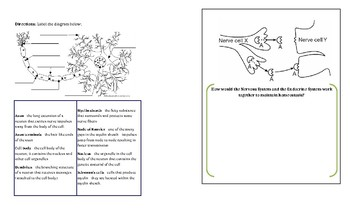 Body System Mini Fordable Booklet: Nervous System