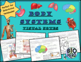 Body System Notes