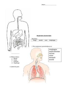Body System Quizzes