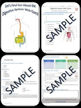 Body Systems Webquests Science Bundle + Vocab Quizzes + Crossword Puzzles