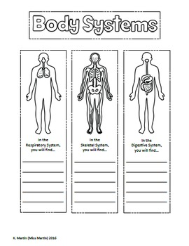 original 2465046 4 human body systems interactive notebook by miss martin tpt