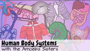 Body Systems Answer Key by The Amoeba Sisters (Amoeba Sisters Answer Key)