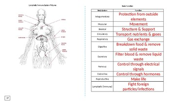 Body Systems Booklet KEY
