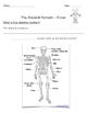 Body Systems Bundle