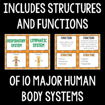 Body Systems Card Sort