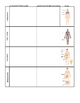 Body Systems Chart Worksheet