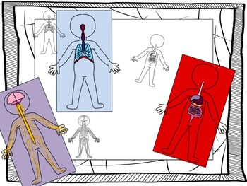 Body Systems Clip Art