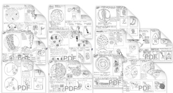 Body Systems Coloring Sheets Bundle