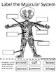 Body Systems Cut and Paste Worksheets