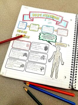 Body Systems Doodle Notes & Quiz {Aligns with NGSS MS-LS1-3}