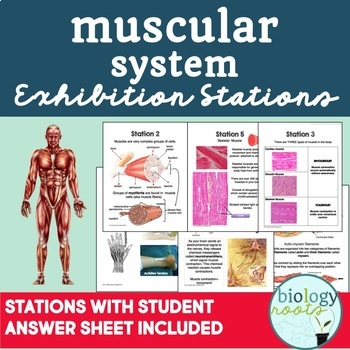 Body Systems Exhibition Stations - GROWING BUNDLE