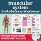 Human Body Systems Exhibition Stations BUNDLE