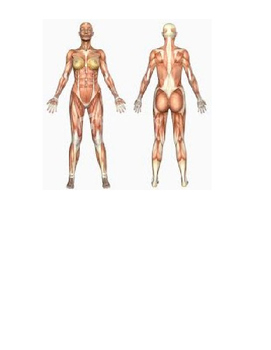 Body Systems Facts