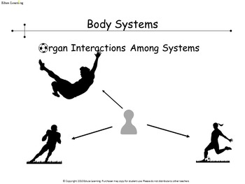 Body Systems Flowchart
