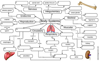 Image Result For Organ Map Human