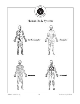 Body Systems Interact