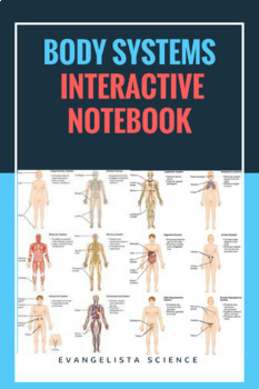original 3115011 1 human body systems interactive notebook by evangelista science tpt