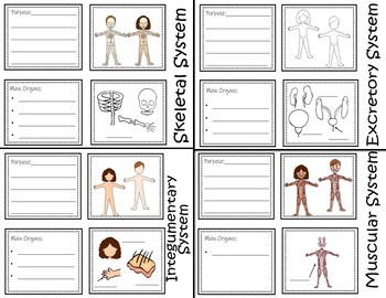 Human Body Systems - Interactive Notebook / Foldable