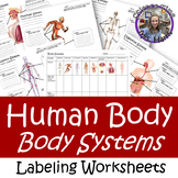 Body Systems Labeling Worksheets