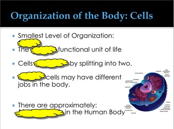 Common Core Body Systems: Levels of Organization
