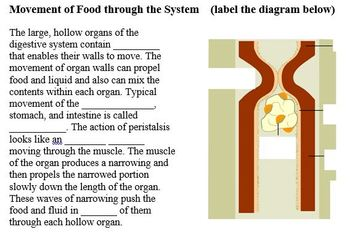 Body Systems Part B - The Digestive System