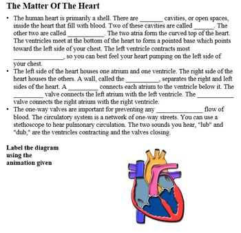 Body Systems Part C - The Circulatory System