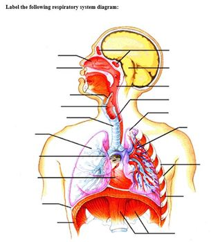 Body Systems Part D - The Respiratory System