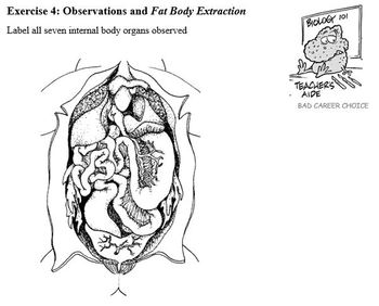 Body Systems Part E - Virtual Frog Dissection