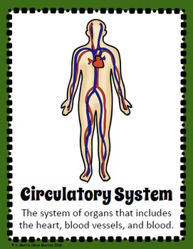 Human Body Systems Poster Pack