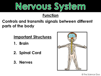 Body Systems - PowerPoint and Notes