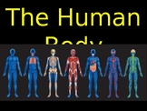 Body Systems Powerpoint