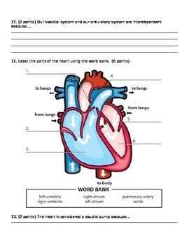 Body Systems Quiz