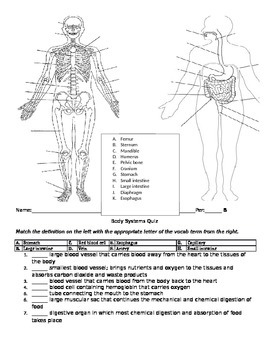Body Systems Quiz (college prep bio)