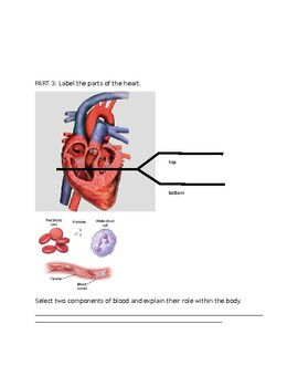Body Systems- Respiratory and Circulatory System Quiz