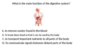 Body Systems Review Game