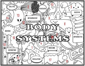 Body Systems Seek and Find Science Doodle Page